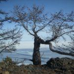 Warum sollte man eine Reise an den Baikalsee im Winter machen?