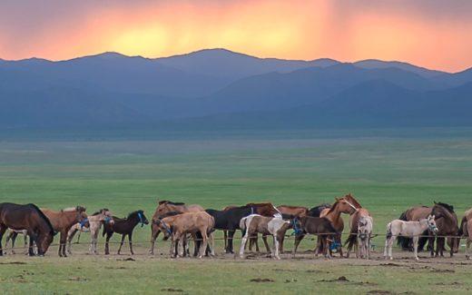 Mongolei - Was muss man sehen?