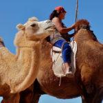 Landeskundliche Aktivreisen in der Mongolei - wer hat´s erfunden?